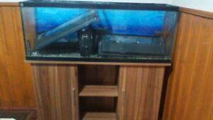 55gl aquarium