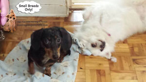 *FULL HOLIDAYS* 15 HRS SUPERVISED PLAYTIME A DAY FOR SMALL K9'S West Island Greater Montréal image 3