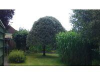 Greenacre Garden services