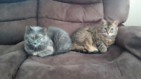 (FREE) Loving Home Needed for 2 Female indoor Cats