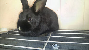 Bunnies looking for forever homes!