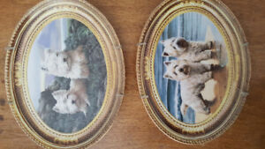 Franklin Mint Heirloom Recommendation plates - Westies