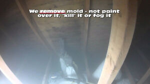 Mold Inspections, Mould Removal / Remediation in Cambridge. Cambridge Kitchener Area image 1