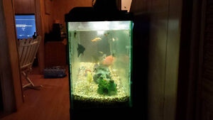 200$ 55 gallon fully decorated tank with Fish.