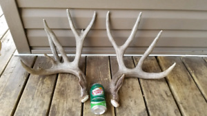 Shed antlers for sale