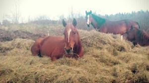 Demi-pension cheval sherbrooke