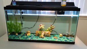 large fish tank complete with fish