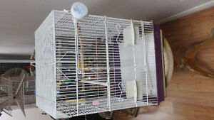 Nice CAGE for Sale