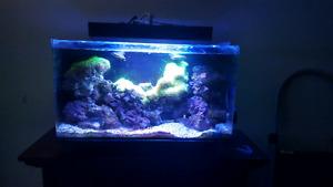 16 gallon Nuvo all in one saltwater aquarium
