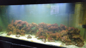 Salt water tank and live rock