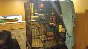 3 birds an cage with everything Windsor Region Ontario image 2