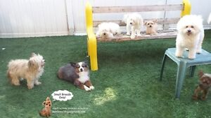 SMALL DOG RESORT IN HOME OF A CERTIFIED TRAINER West Island Greater Montréal image 4