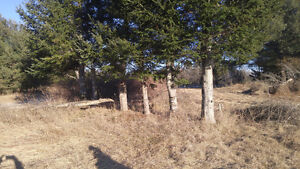 2.16 Acres Residential Vacant Land for Sale, Marmora, ON Peterborough Peterborough Area image 8