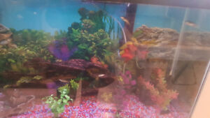 40 Gl Fish Tank With stand