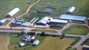 Working beef farm for sale in Nappan, NS