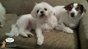 FROM YOUR HOME TO OURS, SMALL DOG SITTING