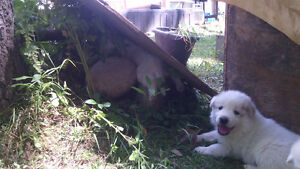 GORGEOUS PUPPIES FOR SALE!!