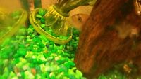 LIVE CYCLED GREEN GRAVEL AQUARIUM...FOR 10 TO 20 GALLON