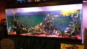 Fish Tank 40 gallon