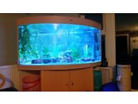 Large Cleair Corner Fish Tank and Stand**Sold subject to collection**