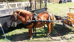 Pony, cart and harness for sale