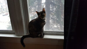 Looking to rehome our 2 kitty's