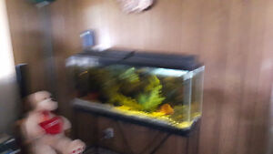 For Sale 55 gallon aquairium, stand and all. pumps plants ect.