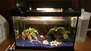5 gallon fish tank with automatic feeder