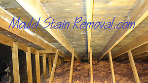 (Mold) Mould Remediation for Attic spaces. Kitchener / Waterloo Kitchener Area image 2