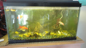 FISH TANK AND ACCESSORIES// FISHES