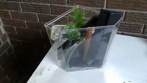 Small Aquarium set up Kitchener / Waterloo Kitchener Area image 3