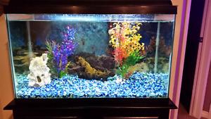 30 gallon aquarium