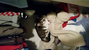 Cat in Lower Sackville