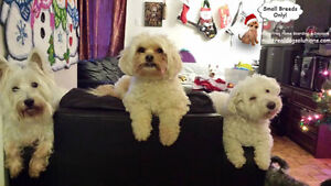 CAGE-FREE SLEEPOVERS & PLAYDATES FOR SMALL DOGS West Island Greater Montréal image 4