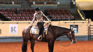 Looking for a kid safe beginner - intermediate lesson horse