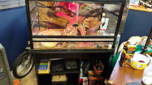Ball Python & Tank With Accessories