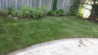 Get a New Lawn Today! All inclusive for Only $1.00 per Sqft
