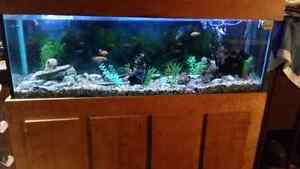 120 gallon  fish tank