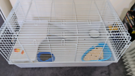 Rabbits for sale 3onths old