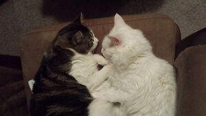 Two Cats That Need A New Home