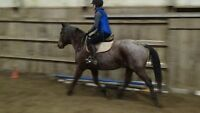 fancy all round prospect quiet ridden by novices