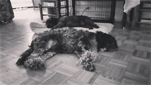 overnight doggy dog sitting pension pour chiens no cage sans