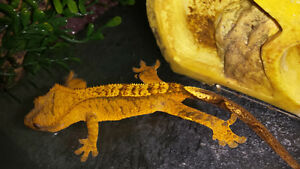 Selling reptile collection