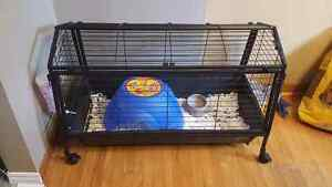 2 female guinea pigs and cage.