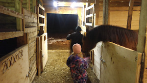 Horse stall for rent