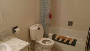 Spacious Apartment to share with just one other Kitchener / Waterloo Kitchener Area image 2