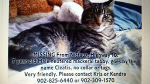 missing cat from nictaux