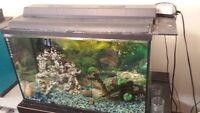 35 Gallon Fish Tank with Accessories and Gold Fish