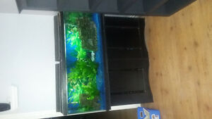 55 gallon with everything you need including a few fish