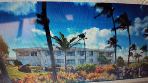 Timeshare rental kauai or honolulu